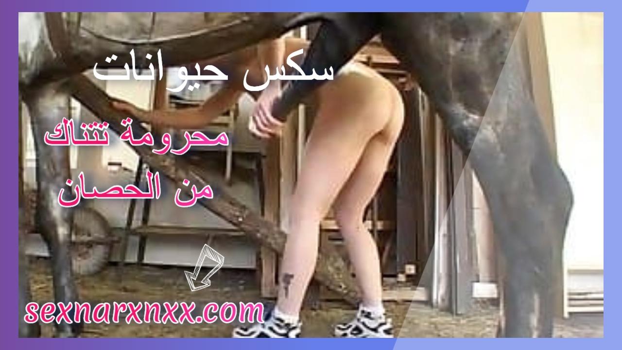 محرومة تتناك من الحصان سكس حيوانات نيج صعب – سكس نار xnxx
