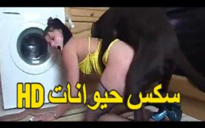 سكس حيوانات hd كلب كبير ينيك البنت فى المطبخ – سكس نار xnxx
